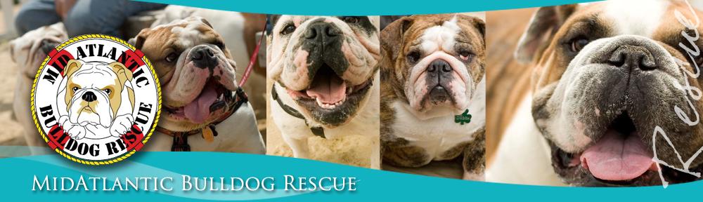MABR | MidAtlantic Bulldog Rescue