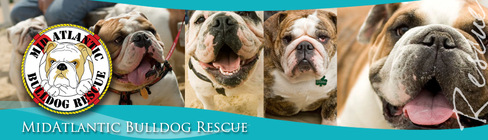 MABR | MidAtlantic Bulldog Rescue